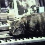 ChatEcoutantLaMusique
